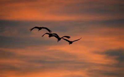 湿地参观及观鸟活动